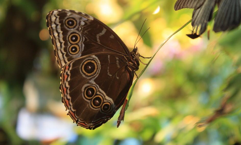 motyli dom vieden