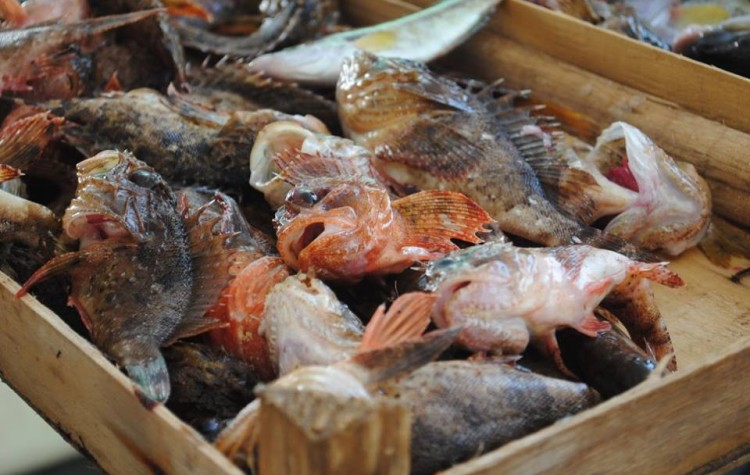 trapani ryby