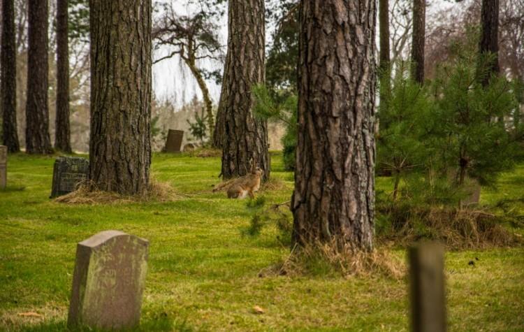 Skogskyrkogården stockholm cemetery
