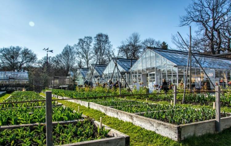 stockholm djurgarden rosendals garden