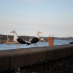 cajky stockholm