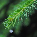 Príroda okolo Mechového jezírka je krásna