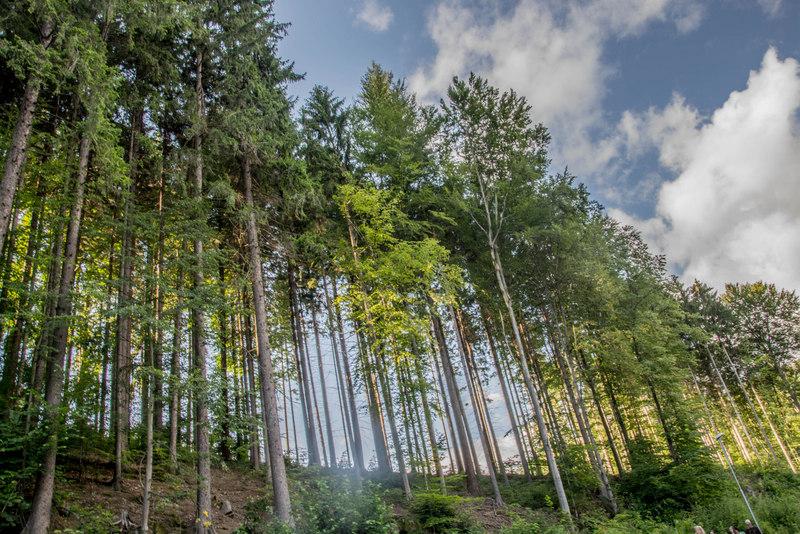 stromy luhačovice