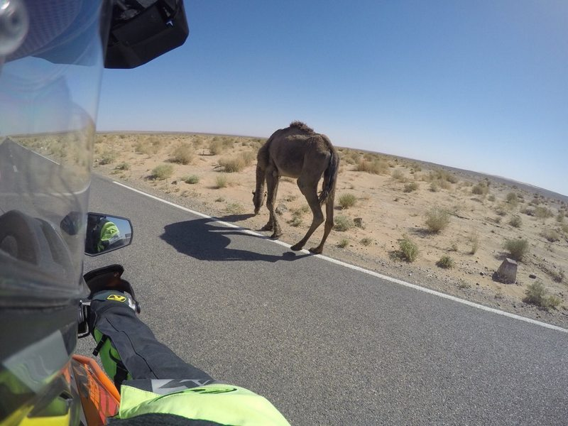 maroko púšť ťava